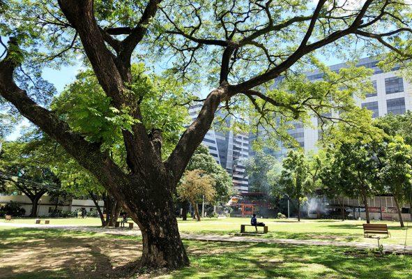 ITパークの公園