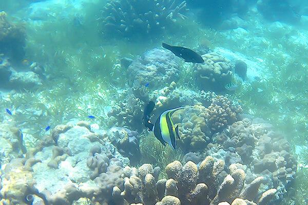 小魚とサンゴ2