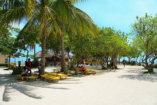 ヤシの木とビーチの様子
