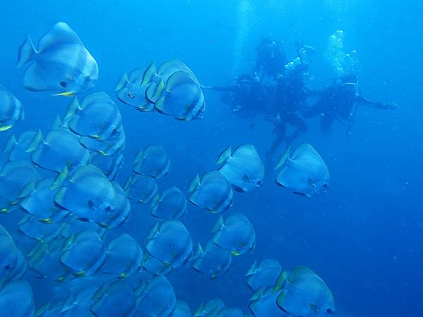 セブ_オプショナルツアー_ダイビング_水中の魚