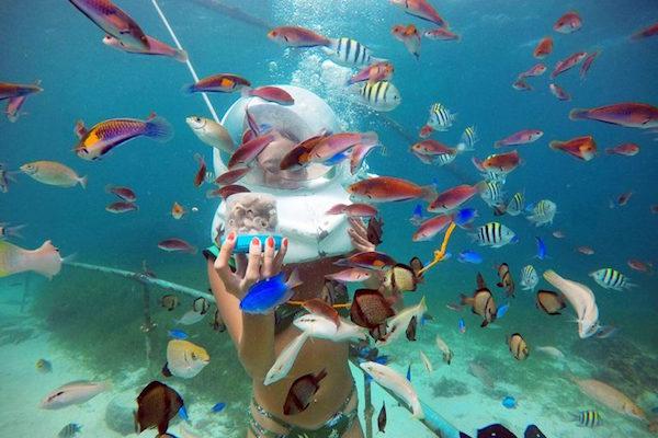 たくさんの海洋生物を目近に見られる