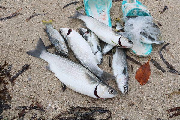 カオハガン島の魚